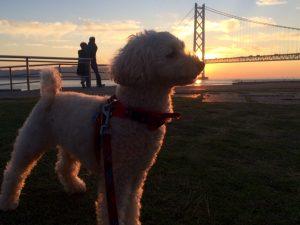 『明石海峡大橋20年』